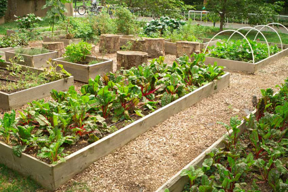Backyard Vegetable Planters